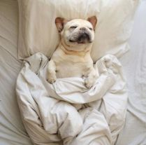 dog-sleeping-bed-funny-animal-photos-29__605